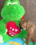 Puppy Love! MonkeyBean, our Boxer.