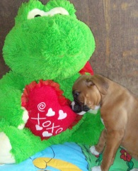 Puppy Love! MonkeyBean, our Boxer.