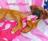 JumpinBean